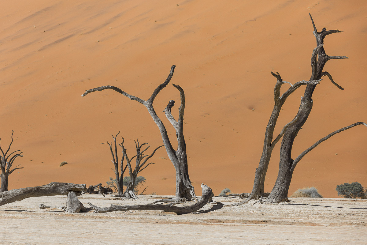 Abgestorbene Bäume im Deadvlei